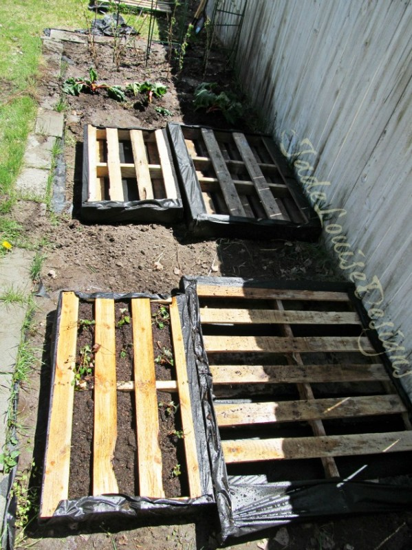 wood-pallet-garden-project